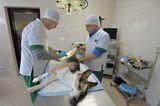 Клиника УВЛ Металлургического района, фото №7